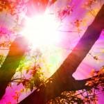Soleil rose ...